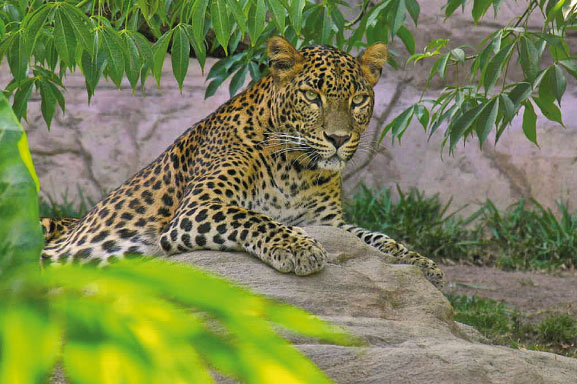 Bioparc Fuengirola, more zoo than you might think